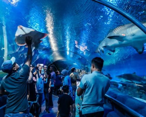 5.-Tips-for-Visiting-Aquaria-KLCC-Kuala-Lumpur-and-Review-1024x768